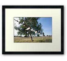 Caught on the wire Framed Print