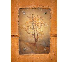 The Last Tree Photographic Print