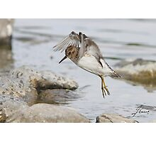 Birdie MATRIX Photographic Print