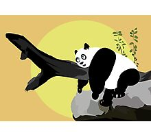 Lazy Panda Photographic Print