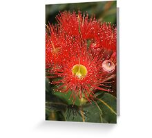 Eucalyptus flowers Greeting Card