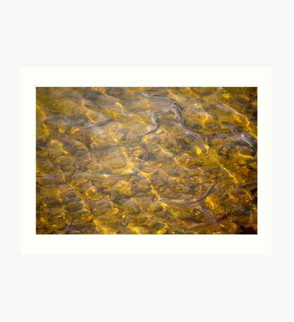 Fishing with my camera Art Print