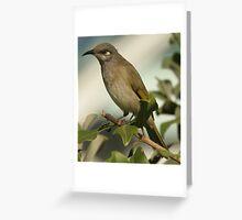 brown honeyeater Greeting Card