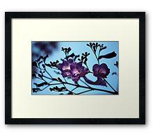 Jacarandas against a Blue Sky Framed Print