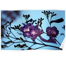Jacarandas against a Blue Sky Poster