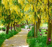 Follow the Yellow Floral Road... by Carol Clifford
