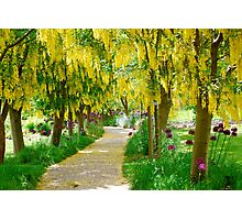 Follow the Yellow Floral Road... Photographic Print