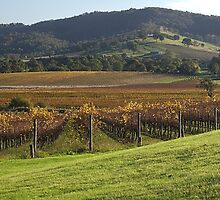 Winery with a View - Country Victoria by Joy Watson
