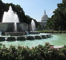 The Capitol, Washington, DC by MATHEW MATHEW