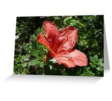 Single Red Azalea - Kinney Garden - © 2010 Greeting Card