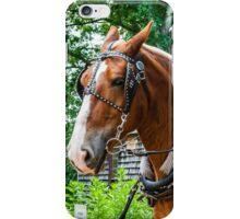 Belgian Draft Horses iPhone Case/Skin