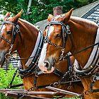 Belgian Draft Horses by Rebecca Bryson