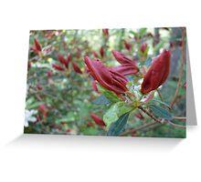 A Sea of Red Azalea Buds - Kinney Garden © 2010 Greeting Card