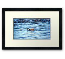 Duck BLUE Framed Print