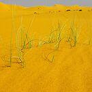 Dunes grasses by Peter Doré