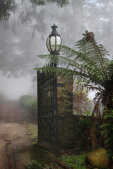 One Tree Hill gate by Robyn Lakeman