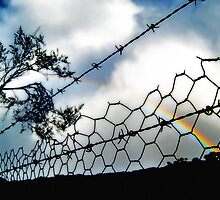 Barbwire Rainbow by Virginia Daniels
