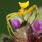Yellow Spider by VladimirFloyd