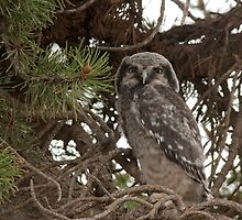 Gotta Leave the Nest Sometime by Coniferous