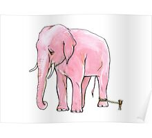 Pink Elephant Tied Up Poster