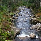 Kiewa River by Harry Oldmeadow