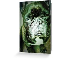 Dom the dog Greeting Card