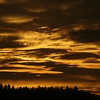 golden sky in Eugene, Oregon by fototaker