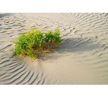 Desert Shrub Photographic Print