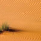 Desert Grass by Peter Doré