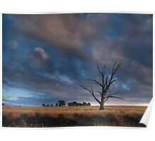 The Lone Tree - Badgery's Creek NSW Poster