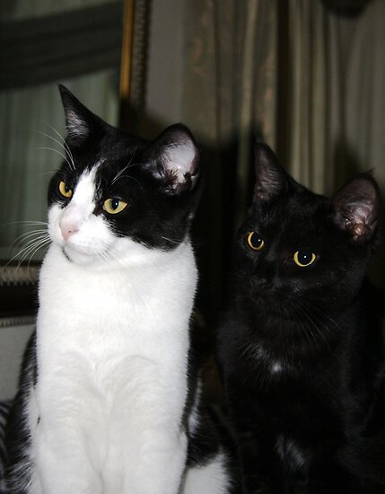 """""""2 Sweet Kittiez"""" by Justine Walke"""