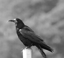 big beak  by Declan Carr