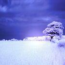 Tree IR by Dfilmuk Photos