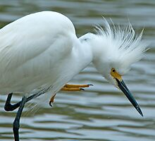Snowy Egret at Avery Island by Bonnie T.  Barry