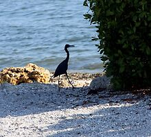 Silhouette Black Heron by June Holbrook
