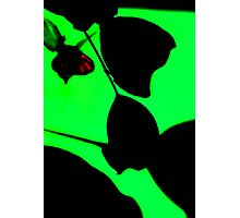 Green Mystery Photographic Print