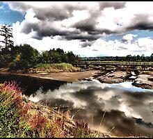 Spencer Island County Park by Robert Breisch