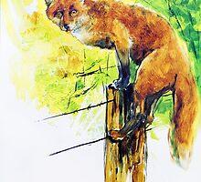 Follow Me Fox by Pieter  Zaadstra