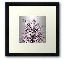 Blossom Cherry Framed Print