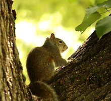 Spring Squirrel by Robert Daveant
