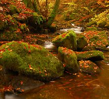 Moness Burn, Aberfeldy, Perthshire, Scotland. by James Paul