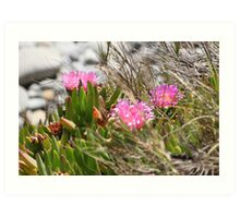 Pink Flowers on the Bluff Art Print