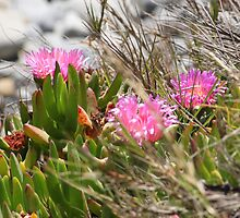 Pink Flowers on the Bluff by jdbussone