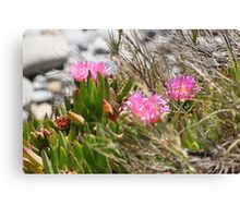 Pink Flowers on the Bluff Canvas Print