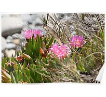 Pink Flowers on the Bluff Poster