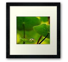 Feeling small in a Big World Framed Print