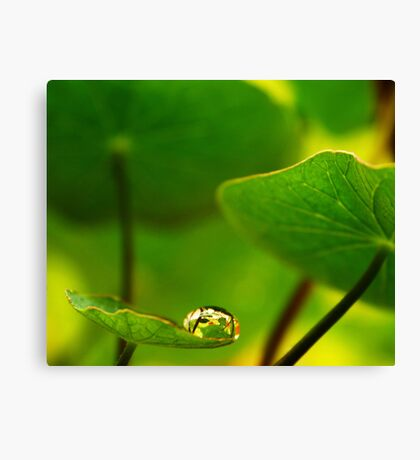 Feeling small in a Big World Canvas Print