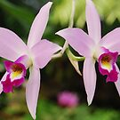 Orchid series #15 by robert murray