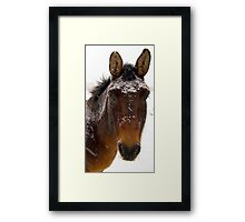Snow Horse Framed Print