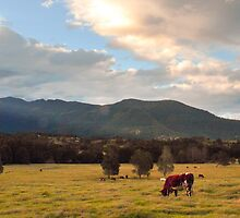 Pastoral by picketty